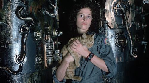 Movie Cats MovieSpoon.com